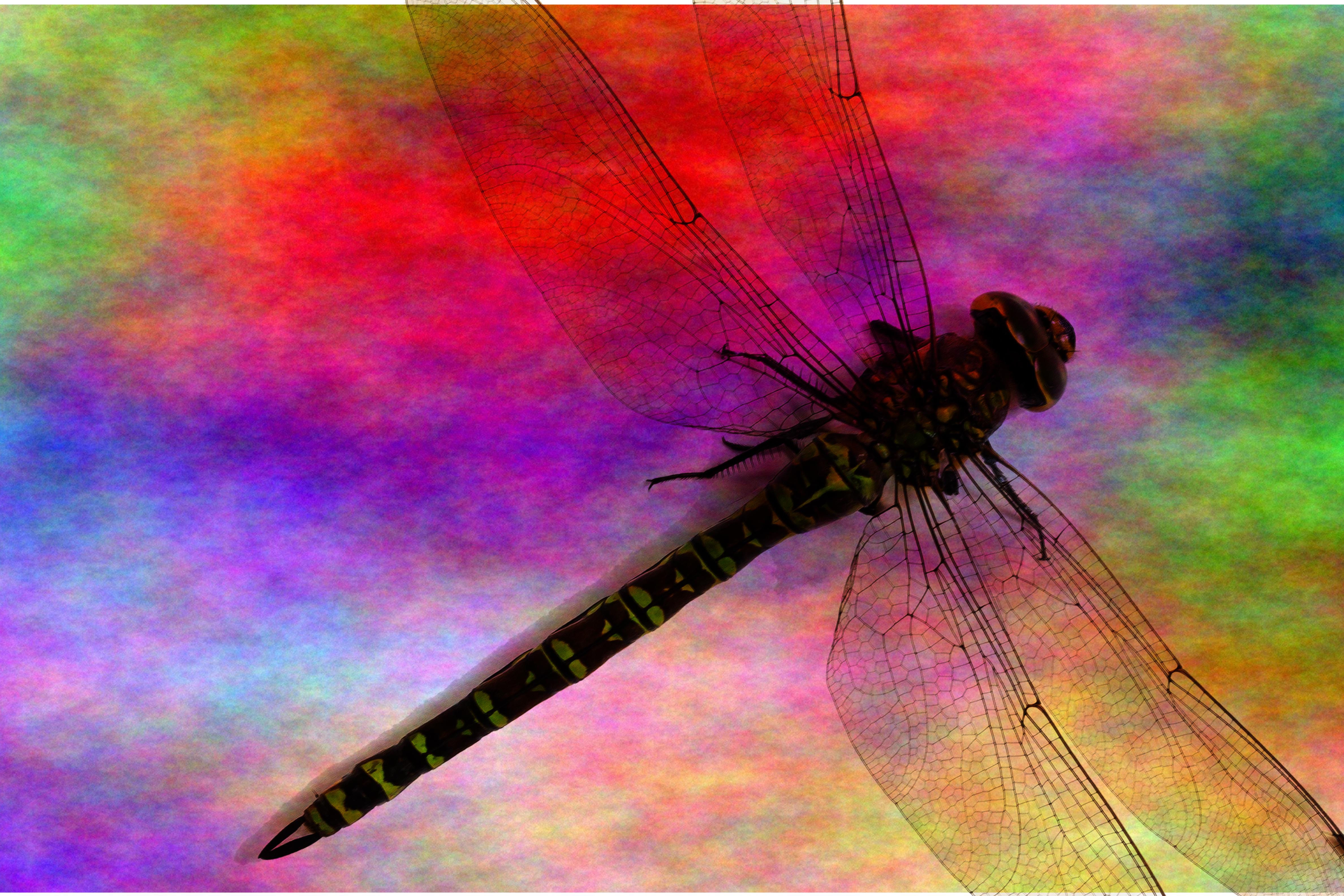 dragonfly-862885_v2