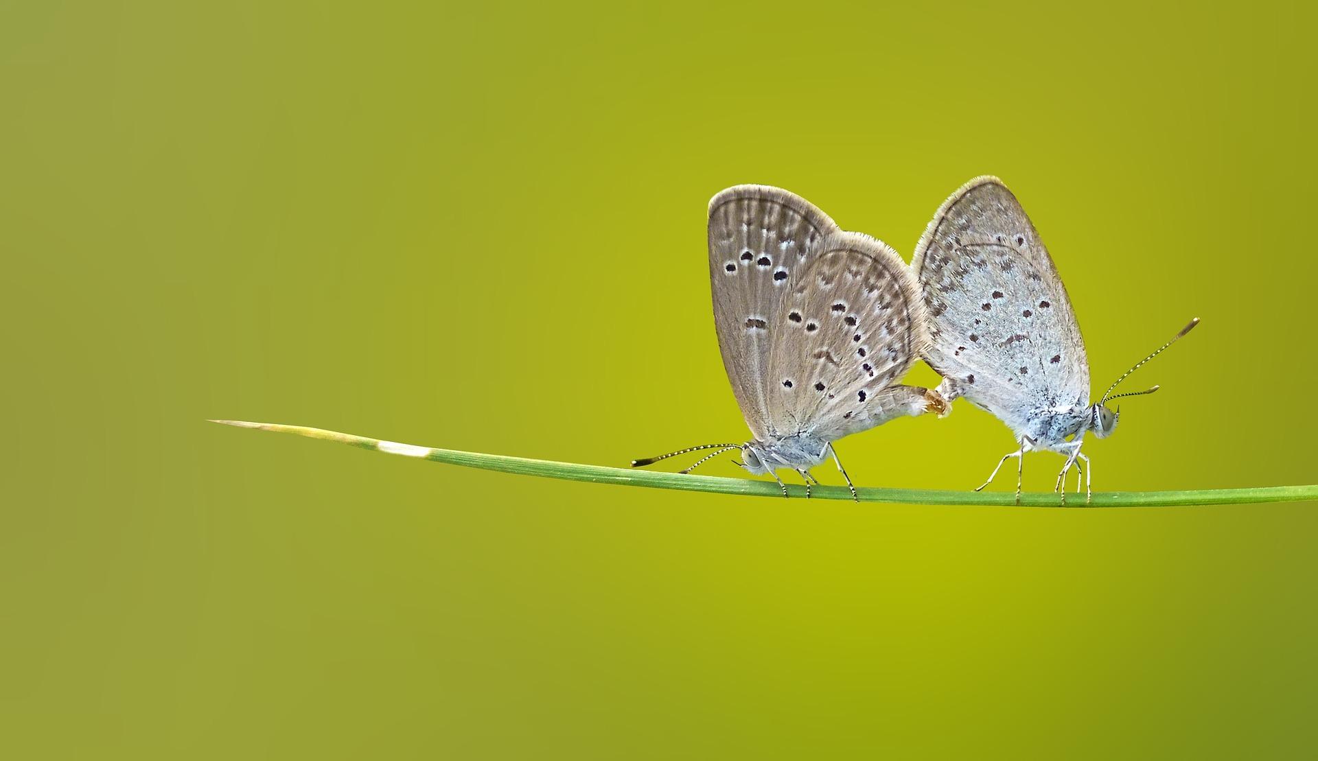 butterfly-1057768_1920
